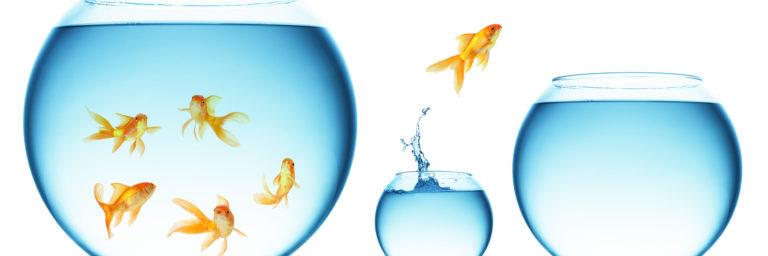 Zarządzanie sobą w zmianie | szkolenie